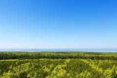Gemengd bos van naald en vergankelijke rassen Mening vanaf de bovenkant Royalty-vrije Stock Fotografie