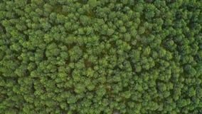 Gemengd bos van Siberië in de zomer stock videobeelden