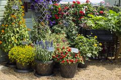 Gemengde Bloemen in de tuinhof van kleipotten royalty-vrije stock afbeelding
