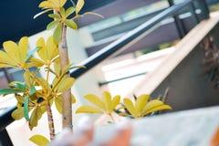 Gemengde boom en verwarmingspijp stock fotografie