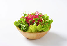 Gemengde groene groenten op glasplaat Stock Foto's
