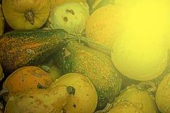 Gemengde kleurrijke pompoenen in licht 7 van de de herfstzonsondergang Stock Afbeelding