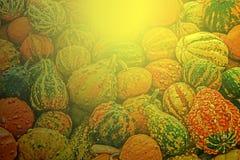 Gemengde kleurrijke pompoenen in licht 4 van de de herfstzonsondergang Stock Foto