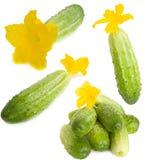 Gemengde komkommers Royalty-vrije Stock Afbeeldingen