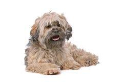 Gemengde rassen kleine pluizige hond Royalty-vrije Stock Afbeeldingen