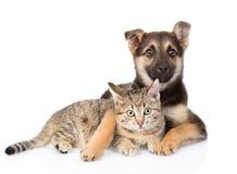 Gemengde rassenhond die gestreepte katkat op witte achtergrond omhelzen Stock Afbeelding