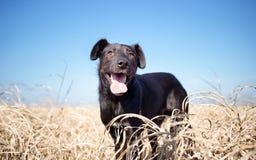 Gemengde rassenhond in geel gras Stock Foto's