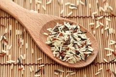 Gemengde rijst in een houten lepel Stock Foto's