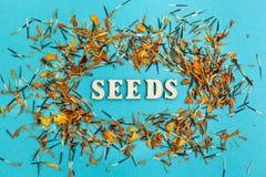 Gemengde zaden en bloemblaadjes van bloemen op een blauwe achtergrond, het woord stock fotografie