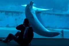 Gemensam bottlenosedelfin (Tursiopstruncatusen) Royaltyfri Bild