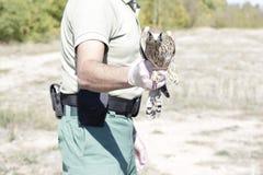 gemensam falcotornfalktinnunculus royaltyfria bilder