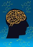 Gemensam hjärnläkarbehandling Arkivfoto