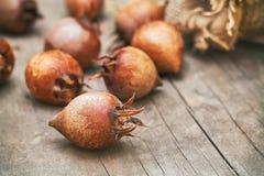Gemensam mispelfrukt Arkivbild