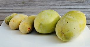Gemensam pawpawfrukt Royaltyfri Bild