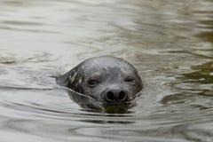 Gemensam skyddsremsa i vatten Royaltyfri Foto