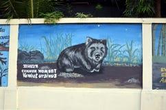 gemensam wombat Fotografering för Bildbyråer