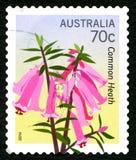 Gemensamma Heath Plant Australian Postage Stamp arkivbilder