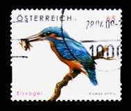 Gemensamma kungsfiskareAlcedoatthis, serie, circa 2008 Arkivbilder