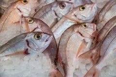 Gemensamma pandora fiskar på is på fisken shoppar Arkivfoto