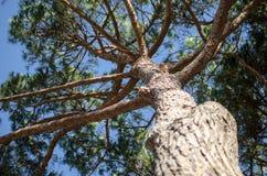 Gemensamt maritimt sörjer trädet arkivfoto