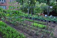 Gemenskapgrönsakträdgård Arkivbild