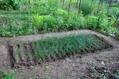 Gemenskapgrönsakträdgård royaltyfri fotografi