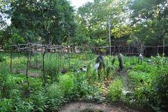 Gemenskapgrönsakträdgård arkivfoto