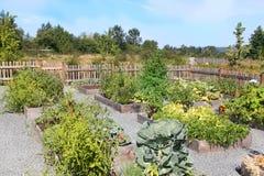 Gemenskapgrönsakträdgård Royaltyfria Foton