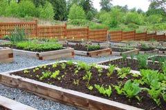 Gemenskapgrönsakträdgård Fotografering för Bildbyråer