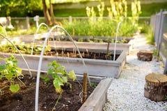 Gemenskapkökträdgård Lyftta trädgårdsängar med växter i grönsakgemenskapträdgård royaltyfri fotografi