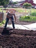 gemenskaplantgården som förbereder sig, smutsar volontären Arkivfoton