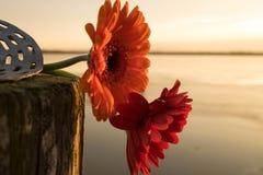 Gemini przy jeziorem Fotografia Royalty Free
