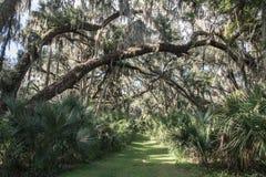 Gemini Springs Park em Florida imagem de stock