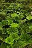 Gemischte brasilianische subtropische Flora lizenzfreie stockfotografie