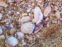 Gemischte leere Weichtier- Muscheln und Sand auf einem Schwarzen Meer setzen bei Primorsko, Bulgarien auf den Strand Lizenzfreies Stockfoto