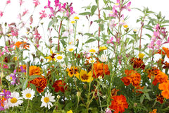 Gemischte wilde Feldblumen stockfoto