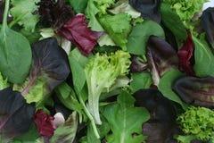 Gemischter grüner Kopfsalat-Hintergrund Stockfoto