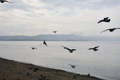 Gemlik Bursa, Τουρκία Στοκ φωτογραφία με δικαίωμα ελεύθερης χρήσης