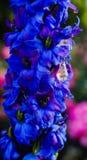 gemma di scintillio di favola di estate dei fiori Fotografia Stock