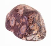 gemme polie de jaspe de peau de léopard sur le blanc photos libres de droits