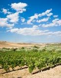 Gemodelleerd van wijngaard royalty-vrije stock afbeeldingen