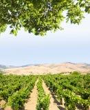 Gemodelleerd voor wijngaard stock afbeeldingen