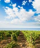 Gemodelleerd voor wijngaard stock fotografie