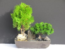 Gemodelleerde Bonsai Stock Afbeelding