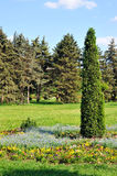 Gemodelleerde park-arborvitae in het bloembed. Stock Foto