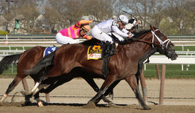 Gemologist Wins The Woodward Memorial Royalty Free Stock Photography