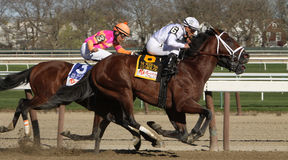Gemologist Wins The Woodward Memorial Royalty Free Stock Photo