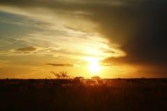 Gemsbok ή Gemsbuck στο ηλιοβασίλεμα Στοκ εικόνες με δικαίωμα ελεύθερης χρήσης
