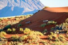 Gemsbok opuszcza odciski stopy w piasku Zdjęcie Stock