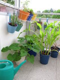 Gemüse auf dem Balkon Stockbilder